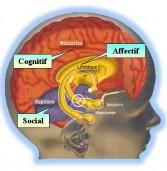 Deux théories sur le cerveau pour mieux comprendre le Mind Mapping